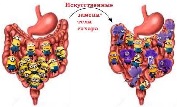 искусственные подсластители губят здоровую микрофлору кишечника - схема