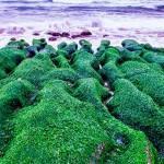 водоросль хлорелла на камнях