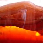 фото чайного гриба
