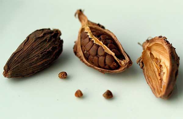 семена внутри стручка кардамона