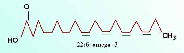 Докозагексаеновая кислота