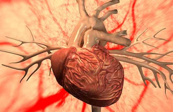 изображение сердца и коронаров