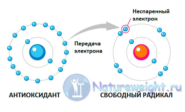 схема реакции с антиоксидантами