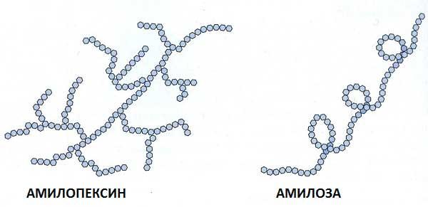 рисунок молекул амилозы и амилопектина
