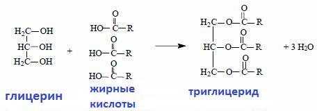 формула триглицеридов