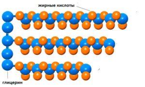 схема структуры молекулы триглицерида