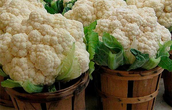 Чем обусловлена удивительная польза цветной капусты для организма человека?