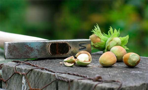 лесные орешки