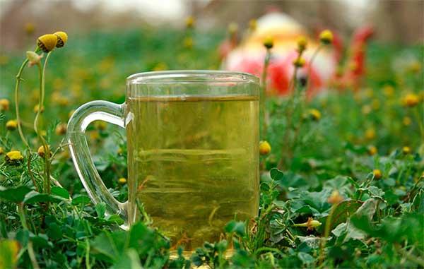 Чай из ромашки: кому несет пользу, а кому – вред?