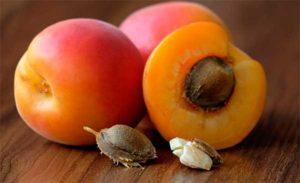 абрикосы, ядра которых содержат витамин В17