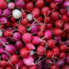 Чем полезна красная редиска для организма, есть ли у нее вред