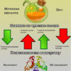 Что полезнее сахар или фруктоза? Ни то, ни то (инфографика)