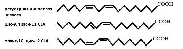 линолевая кислота структурная формула