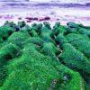 Хлорелла: значение для похудения и очистки организма