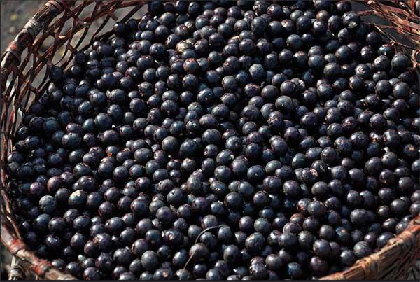 корзина с ягодами асаи
