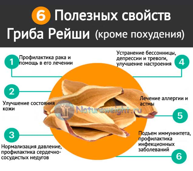полезные свойства гриба рейши - инфографик
