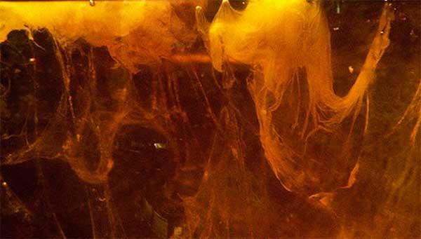 Темные нити чайных грибов