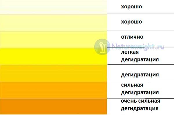 таблица цвета мочи