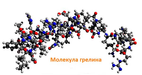 молекула гормона гредина