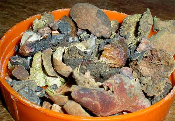 ягоды для приготовления трифалы