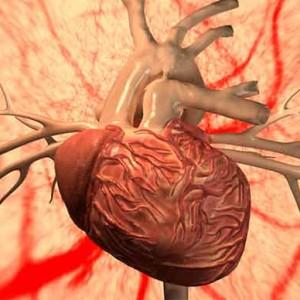 Польза и вред черники для здоровья: актуальные научные данные