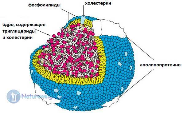 3D изображение липопротеина