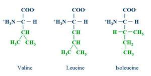 формулы лейцина, изолейцина и валина