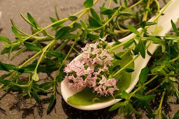 цветочки тимьяна