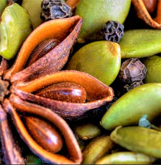 В чем разница между бадьяном и анисом, какие у этой специи есть полезные свойства и противопоказания