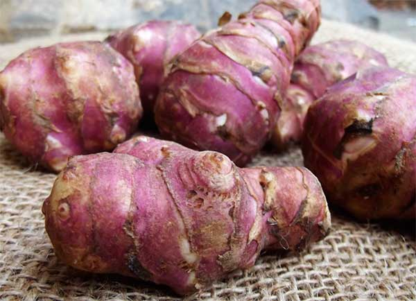 Польза и вред топинамбура, рецепты приготовления для больных сахарным диабетом и всех прочих