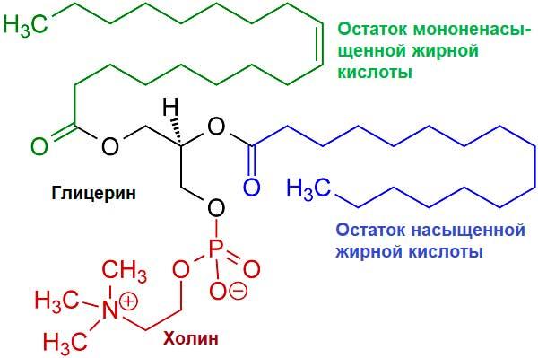 химическая формула лецитина
