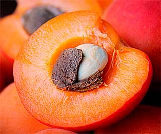 плод с косточкой