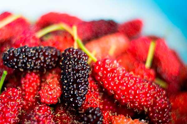яркие плоды