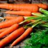 Чем полезна морковь (сырая и вареная), сколько можно съедать в день