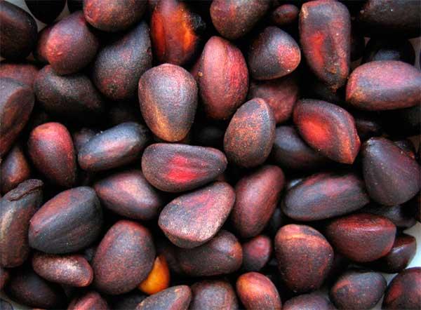 семена кедра