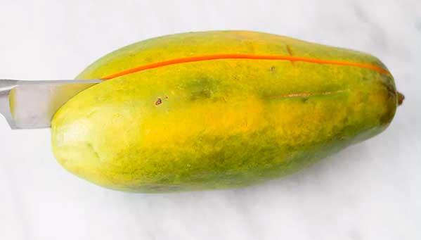 продольный разрез плода