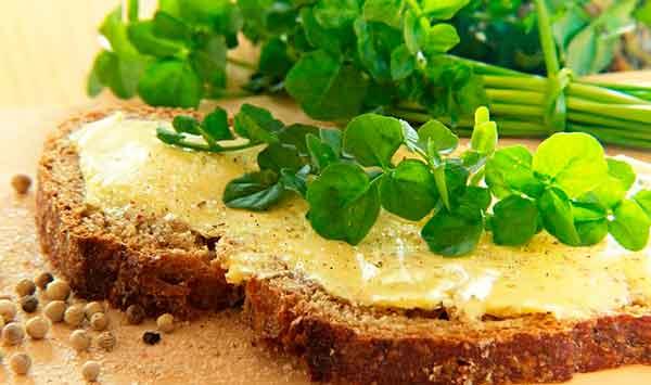 Кресс салат польза и вред для здоровья