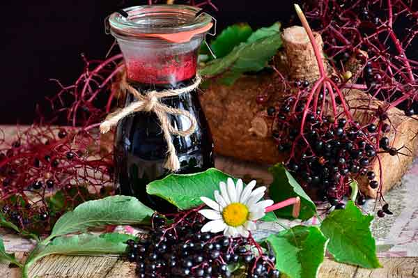 продукты из черной бузины