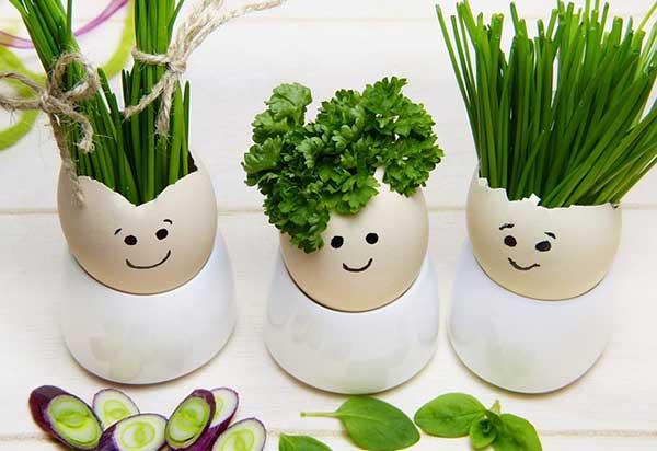 яйца и зелень