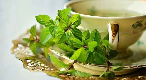 чашка и листья мяты