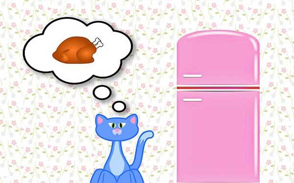 кошка мечтает о еде