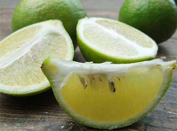 плод бергамии в разрезе